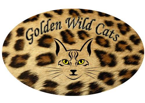 Golden Wild Cats